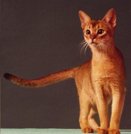 Wodan's Domingo; male 23 (1979-1994)